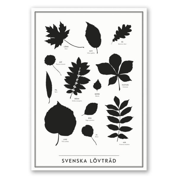 Poster Lövträd från Kunskapstavlan