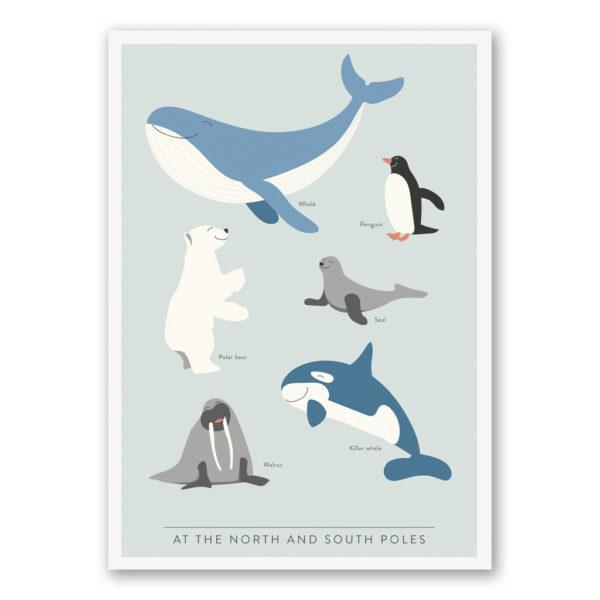 Poster Nord- & sydpolen från Kunskapstavlan