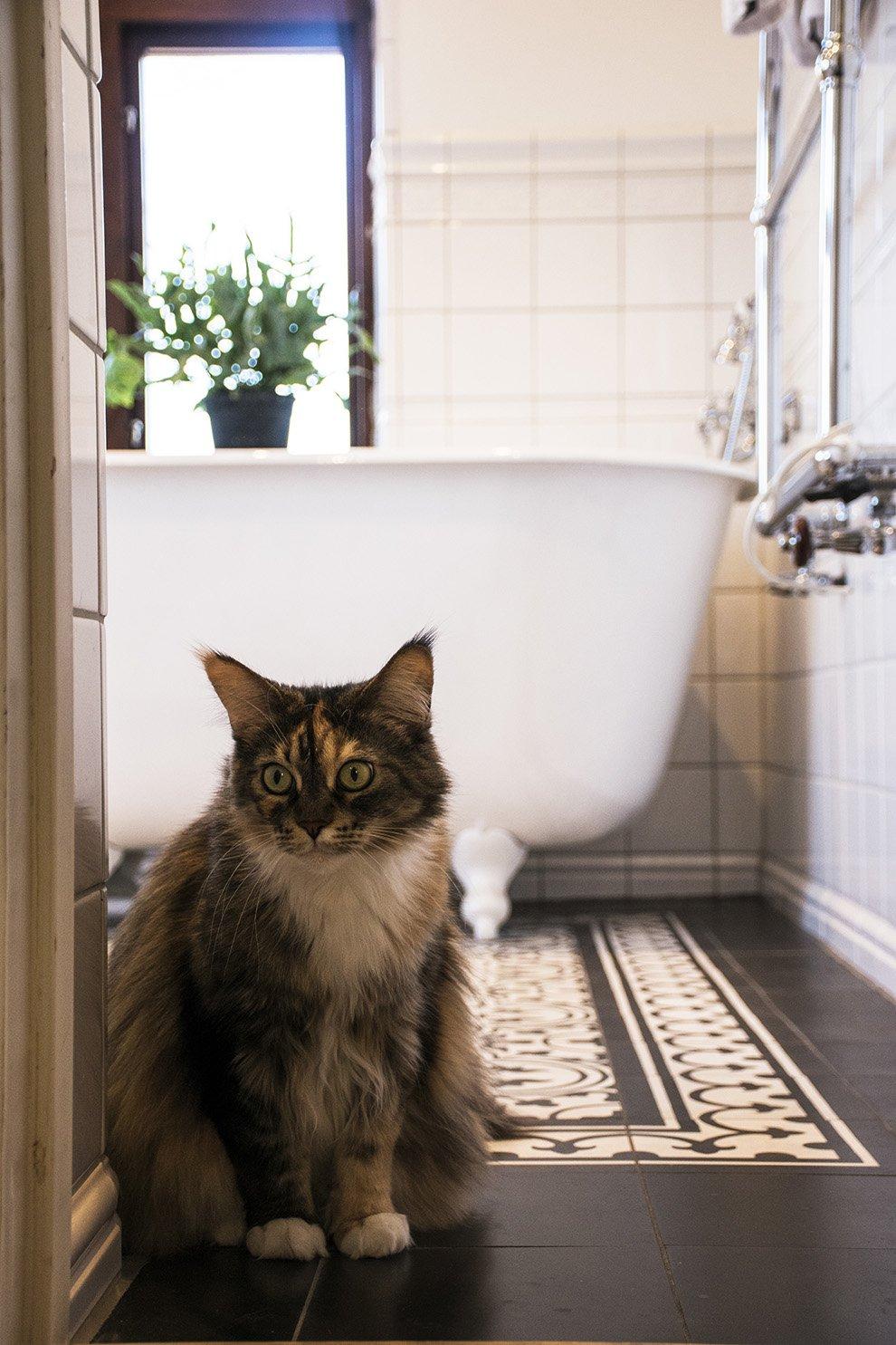 badkar_med_katt